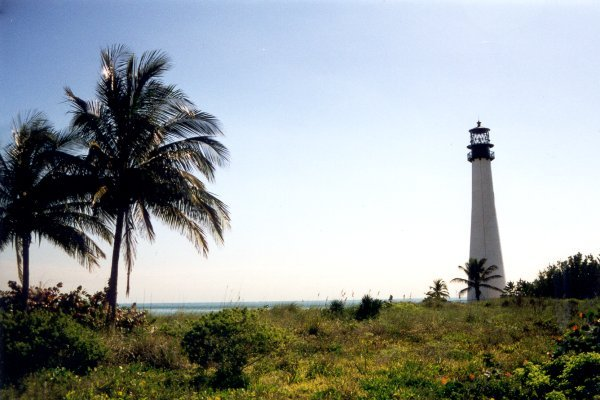 Lighthouse and Palmtrees